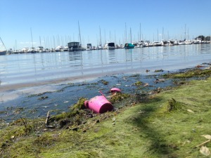 Dirty river banks on Swan River shores