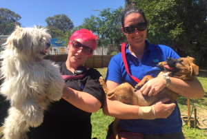 Volunteers help the dogs exercise and rehabilitate