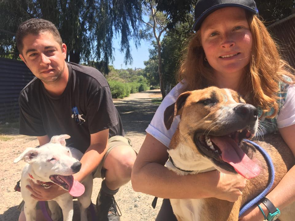Volunteers take the rescue dogs out for playdates