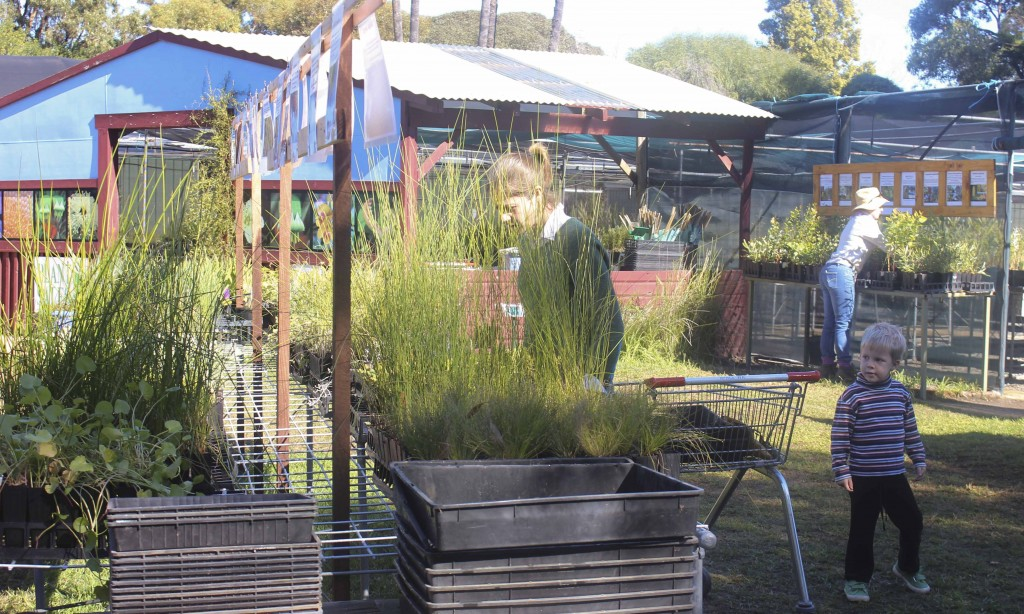 Local Residents come to Apace WA to purchase Native Fauna for their gardens.