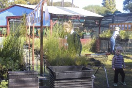 ENVIRONMENTAL GROUP SETTING A-PACE FOR NATIVE PLANTS IN PERTH COMMUNITIES
