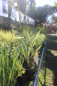 Apace WA provide extensive information on care for each different plant.