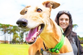 Not Such a Great Future for West Australian Greyhounds