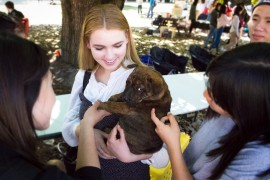 Stop and Paws: Animals Help Students Through Rough Times