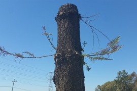 Razed Roe 8 site shows signs of life