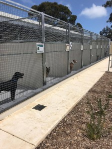 Shenton Park Dog Refuge home.  Photo Tiffany Bond