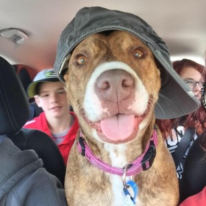 Staffy Lucy survived a rare fungal infection. Picture: Leah Pickering