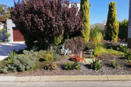Verge gardens providing environmental benefits to local suburbs