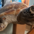 Environment centre fighting to get their turtles back
