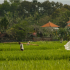 Indonesia bouncing back as pandemic hits hard